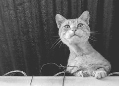 Bibbidi Bobbidi Boo (Tomás Hornos) Tags: gato cat mascota pet animal ángulo contrapicado monocromo móvil mobilephotografy mobile fotosconelmóvil fotografíaconmóvil smartphone blancoynegro blackandwhite blackwhite