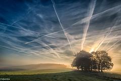 30102016-DSC_0211 (vidjanma) Tags: givroulle bosquet ciel silhouettes soir
