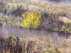 Autumn textures (Dumby) Tags: landscape ilfov românia autumn fall colors nature texture outdoor vedetation