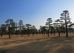 Imperial Palace gardens (tom_2014) Tags: japan japanese japanesegarden tree lawn tokyo palace imperialpalace emperor asia asian eastasia travel famous landmark plant landscape garden view sky light buildings city capital trees topiary pine pinetree