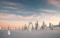 Lovely Lapland (ikkasj) Tags: pallasyllästunturinationalpark muonio lapland finland snow winter felllapland