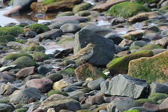 Water Pipit (Dougie Edmond) Tags: westkilbride scotland unitedkingdom bird pipit nature wildlife
