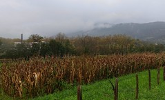 Entrado la niebla por Jaizkibel (eitb.eus) Tags: eitbcom 16599 g1 tiemponaturaleza tiempon2019 monte gipuzkoa hondarribia josemariavega