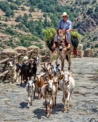 Coming home... (Tapas in the sun) Tags: capileira poqueira sierranevada andalusia dog alpujarra alpujjaras andalucia españa shepherd valley