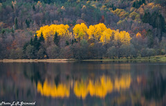 Autumn . Kalandsvatnet ( 1 ) (2000stargazer) Tags: kalandsvatnet fana bergen norway lake reflections autumn autumncolors fall yellowleaves leaves waterscape landscape forest trees nature october canon gettyimages