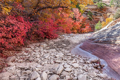 A peaceful path (Gérard & Beth) Tags: zion zionnationalpark nationalpark unitedstates utah east canyon autumn fall hiking wild wilderness rock sandstone stones path creek dried boxelder leaves tree