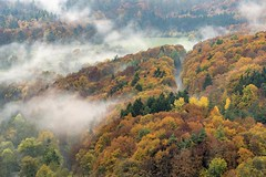 *Autumn forest in the morning mist* (Albert Wirtz @ Landscape and Nature Photography) Tags: albertwirtz südeifel eifel wald eifelwald forest tree baum nature natur natura naturaleza landscape landschaft paesaggio paysage campo campagne campagna autumn herbst autunno herfst fall nebel mist fog brume bruma brouillard nabbia laniebla rheinlandpfalz rhinelandpalatinate bitburg hüttingenanderkyll kylltal laubfärbung fallfoliage foliage nikon d810 fineart fineartphotography landscapefineart naturefineart