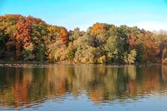 The Fall Gathering (amillionwalks) Tags: geese mohawklake park water colours fall autumn october 2019 foliage birds