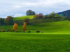 Herbst autumn fall 2019 (Martinus VI) Tags: herbst hillside automne autumn fall november novembre martinus6 martinus6xy martinus martinusvi y191109