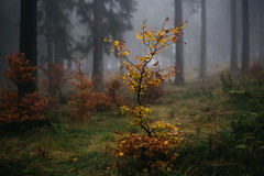 +§+§+§+ (Miles Schweitzer) Tags: herbst autum forest wald nebel fog colorful farbig farben laub nature natur canon fullframe bokeh