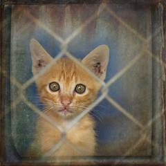 curious kitten (ulli_p) Tags: asia art artofimages aworkofart canoneoskissx5 flickraward kitten ruralthailand southeastasia thailand texture textured texturedphoto