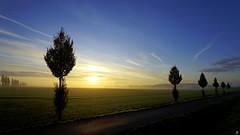 PAYSAGES DE PICARDIE 379 (aittouarsalain) Tags: paysage picardie landscape aurore levant aube matin brume brouillard soleil ciel silhouettes arbres champ campagne nature