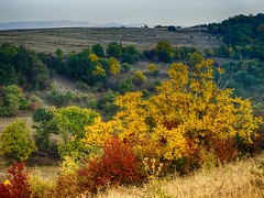 Automne au Caucase du Nord (v o y a g e u r) Tags: autumn goldenautumn herbst otoño landscape paysage caucasus caucasedunord hills mountains colours sony arbres trees arboles chechnya daghestan