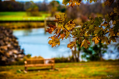 Gold for All. (Igor Danilov Philadelphia) Tags: fall gold leaf lake seat bench park time moment meaning sense spot core stop view personal direct life autumn november warm tranquility calm serenity peace grace