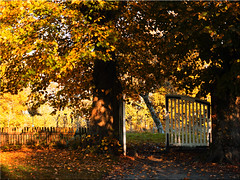 The gate to the apple garden (Ostseetroll) Tags: deu deutschland geo:lat=5414699764 geo:lon=1040924534 geotagged plön prinzeninsel schleswigholstein herbst autumn olympus em5markii pforte gate