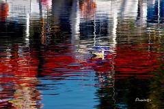 09_Reflejos y colores (Anavicor) Tags: reflections reflejos water agua puerto port harbour honfleur normandy normandie francia france red rojo blanco azul white blue duck pato nikon tamron anavicor anavillar villarcorreroana