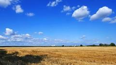 abgeerntet   harvested (swordsweeper) Tags: berlin brandenburg ernte abgeerntet getreidefeld gropiusstadt berlinneukölln wolken clouds himmel sky berlinermauerweg cornfield deutschland germany