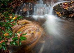 blue ridge mountain autumn #4 (Der Berzerker) Tags: 2019 asheville d750 fall fallcolors nc nikon pisgahnationalforest autumn