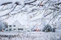 first snow (Yuki (8-ballmabelleamie)) Tags: snowscene snowylandscape dawn daybreak november fall autumn branches twigs house chicagosuburbs