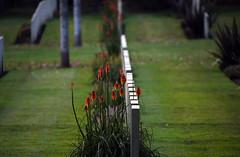 Brookwood 7 November 2019 004 (paul_appleyard) Tags: brookwood commonwealth war graves memorial november 2019 surrey