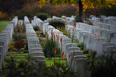 Brookwood 7 November 2019 003 (paul_appleyard) Tags: brookwood commonwealth war graves memorial november 2019 surrey