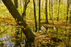 025034a  An Artist Finding Inspiration In Aman Park (David G. Hoffman) Tags: park fallcolors fall reflections creek floodplain trees