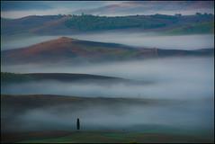Einsam ist jeder Baum und Stein (angelofruhr) Tags: italien italy italia nebel toskana nebbia valdorcia pienza landschaft hügel littlestories picswithsoul fog baum zypressen