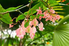 Vlindorado (Ralph Apeldoorn) Tags: bloem flower vlindertuin vlindorado waarland noordholland nederland