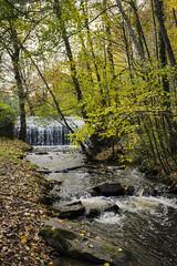 La rivière... (DavidB1977) Tags: france îledefrance yvelines cernaylaville nikon d610 35mm arbre cascade