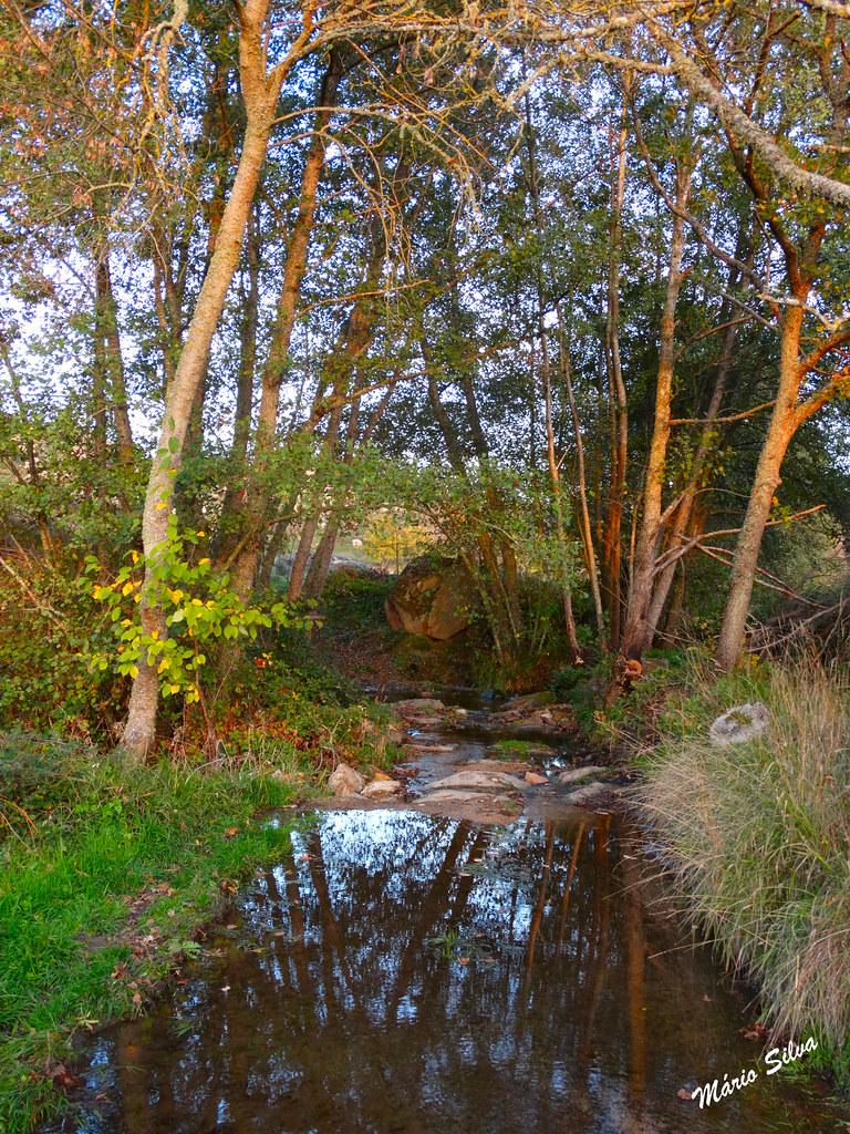 Águas Frias (Chaves) - ... e a água já corre por entre as árvores e encharca os lameiros ...