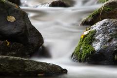eau (Laurent Hutinet) Tags: fleursetplantes automne paysage riviere chavanay loire france