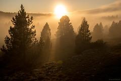 Posé sur le manteau de brumes (Samuel Raison) Tags: hautsplateauxduvercors vercors ombres soleil lumière sun light shadows arbres trees brumes brouillard nuages clouds nikon nikond800 nikon282470mmafsg nikkor