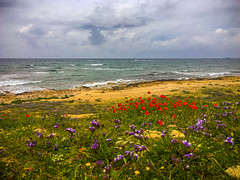 Poppies & Wild Flowers at Lighthouse Beach, Paphos (Bluebullet1) Tags: outdoor nature flowers countryside green colour clouds outside light sky beach sea sun outdoors blue landscape