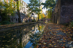 Autumn Leaves ♪—Nat King Cole (ioannis_papachristos) Tags: utrecht canal nl netherlands thenetherlands autumn fall leaves autumnleaves fallingleaves song nat king cole red gold bridge nature afternoon october leave goaway walkaway street cityscape scenery emotive miss missing tress planetrees water canon papachristos eosrp mirrorless culture stretch emotion nostalgia shine reflection bricks