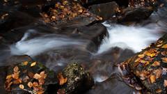 blue ridge mountain autumn #3 (Der Berzerker) Tags: 2019 asheville d750 fall fallcolors nc nikon pisgahnationalforest autumn