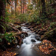 blue ridge mountain autumn #2 (Der Berzerker) Tags: 2019 asheville d750 fall fallcolors nc nikon pisgahnationalforest autumn