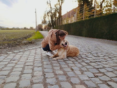 Love... (Maria Godfrida) Tags: smileonsaturday peopleandpets dogs landscape love fauna animals goldenretriever duo pair couple two
