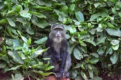 Lago Manyara (Enrica F) Tags: manyara tanzania áfrica nikon safari wildlife nature