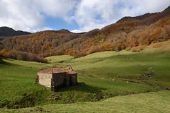 Ventaniella (Paulo Etxeberria) Tags: ventaniella ponga baseliza ermita hermitage ermitage udazkena otoño autumn automne pagadia hayedo beechforest hêtraie