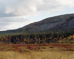 Maaruska (mantila) Tags: ylläs autumn fall mamiya rz67 sekor 6x7 medium format 180mm c41 color negative film analog finland lapland yellow red lomography 400 120 wilderness nature mountain lake
