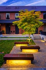 autumn gold (johnoreillydesign) Tags: autumn autumncolours autumngold fall dublin ireland tree lonetree