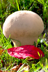 Flickr-191026-0002.jpg (maclapt0p) Tags: colorful eosr fall food mushroom nature brown canon