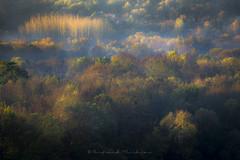 Automn falls (Bertrand Thiéfaine) Tags: automne couleurs champtoceaux campagne valdeloire lamarionnière leverdujour