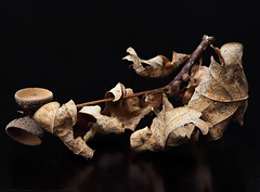 RM-2019-365-313 (markus.rohrbach) Tags: thema fotografie focusstacking natur pflanze blatt stillleben projekt365 lowkey