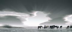 wild horses (Mara Telling:) Tags: sl secondlife lastdove horses rollingstones wildhorses photography
