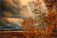 Herbstwolken (linke64) Tags: thüringen deutschland germany natur landschaft laub wolken wolkenhimmel himmel herbst bäume baum birke birken teich wald