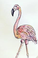 365/365 11/09/19 Flamingo-End 365 (Lainey1) Tags: 365 365365 110919 flamingo bird fowl nature wildlife elainedudzinski lainey1 doodle art sketch draw sketchoff girlzsketchy illustration abstract sketching drawing artist sketchbook graphics womensketchshit doodles doodling popart sharpies watercolor pinkflamingo pink