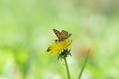 farfalla (manuela.nardulli) Tags: farfalla fiori fiore animali natura bosco