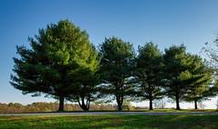Still green! (Millie Cruz (On and Off)) Tags: pine trees memoriallakestatepark grantvillepennsylvania green autumn fall grass sky blue shadows bench canoneos5dmarkiii ef24105mmf4lisusm flickrlounge weekendtheme