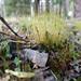 WW_Moss & Lichens_TMS